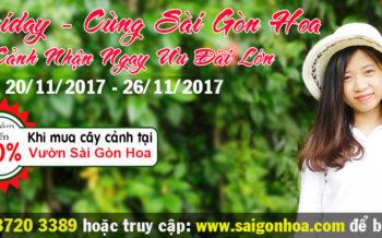 Black Friday Cung Sai Gon Hoa Mua Cay Canh