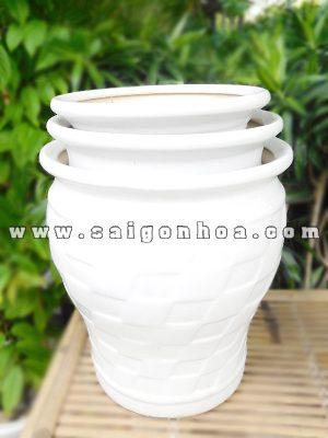 Bo Chau Su Bau Men Trang