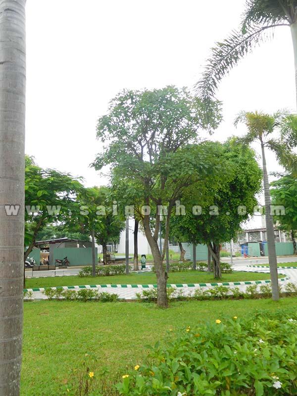 Cay Loc Vung Trong Khu Dan Cu