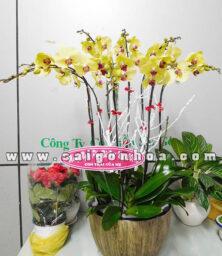 Chau Lan Ho Diep 8 Canh