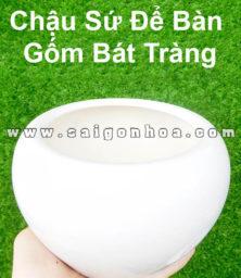 Chau Su Trang De Ban