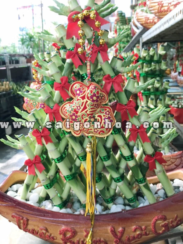 Cay Phat Loc Tam Gia Loại 6 Tang