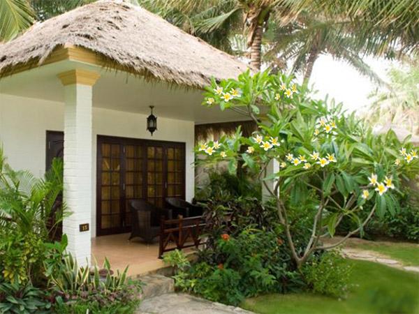 Cay Su Hoa Vang Trong San Vuon