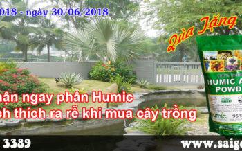 Nhan Ngay Phan Humic Va Thuoc Kich Thich Ra Re Khi Trong Cay