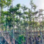 Bang Dai Loan Cong Trinh Dep