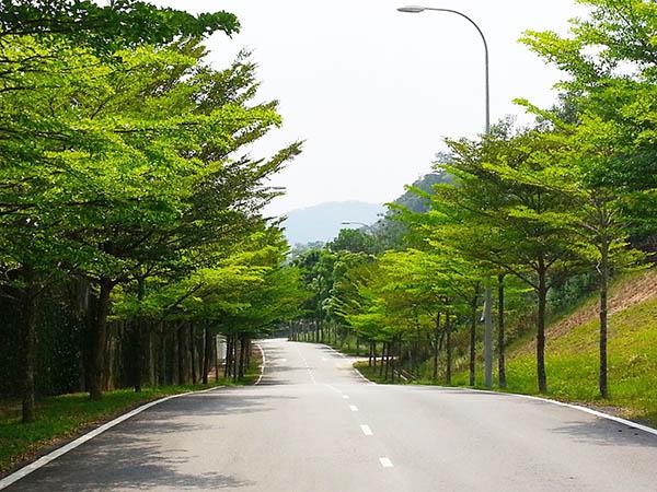 Nơi Bán Cây Bàng Đài Loan Uy Tín - Chất Lượng