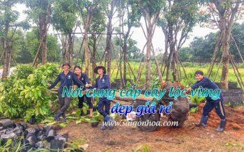 Noi Ban Cay Loc Vung 1