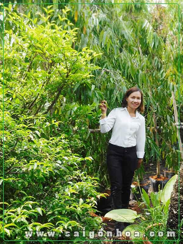cây hoang nam cong trinh