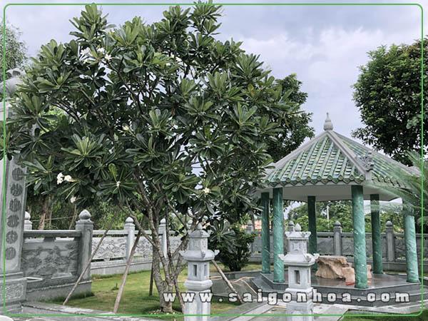 Dang Cay Su Dai