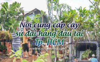 Noi Ban Cay Su Dai Tphcm