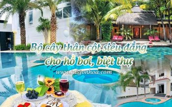 Bo Cay Than Cot Ho Boi