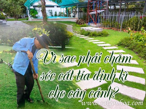 Cham Soc Dinh Ki Cay Co