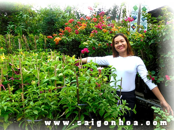 Huynh Anh Hoa Tim 2