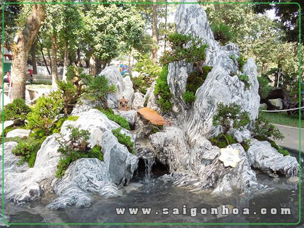 Nhung Loai Cay Pho Bien Cho Tieu Canh Hon Non Bo