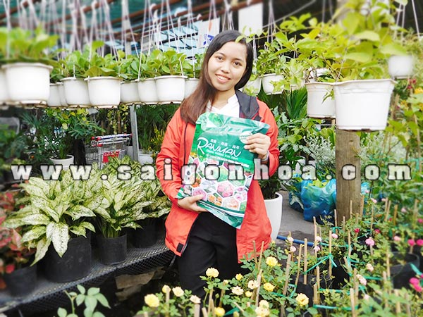 Phan Bon Danh Cho Hoa Hong