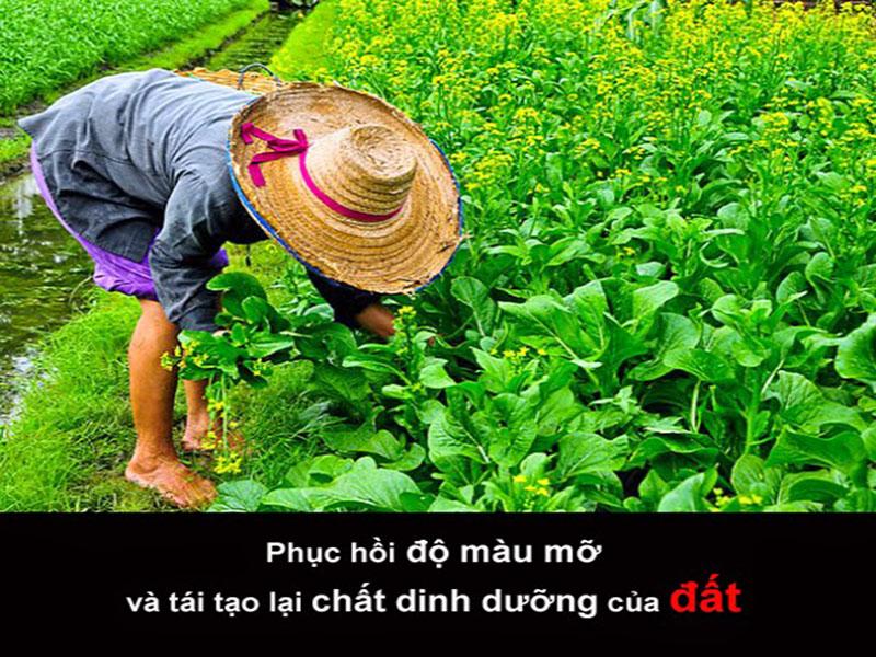 Phan Huu Co Emz Fusa Phuc Hoi Dat