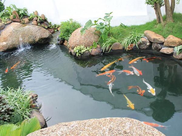 Thiết Kế Thi Công Cảnh Quan Hồ Cá Sân Vườn