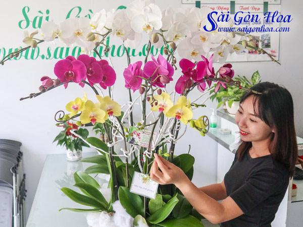 Hoa Canh Qua Tang 20 10