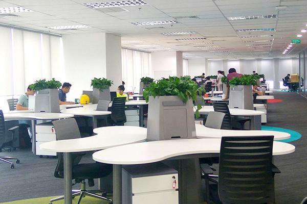 5 lợi ích bất ngờ từ cây nội thất - cây văn phòng