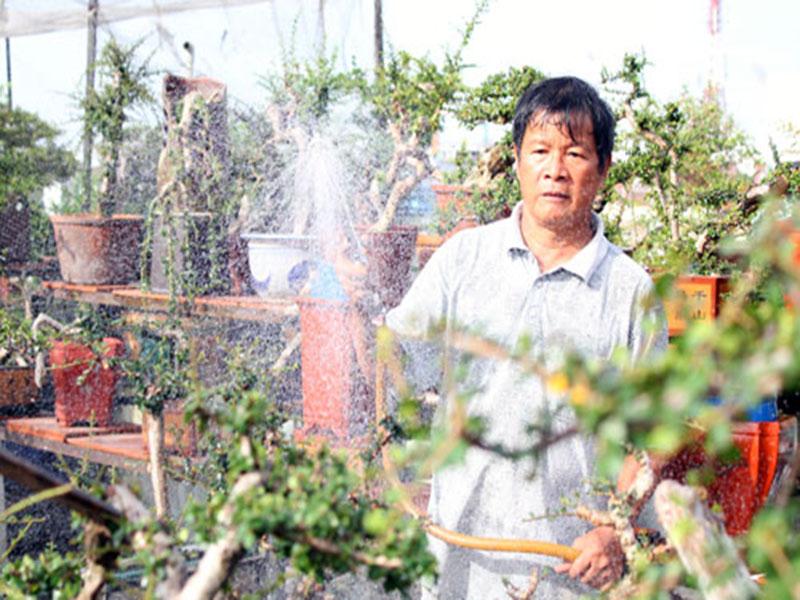 Hướng dẫn chăm sóc cây trồng trong chậu ngoài sân vườn