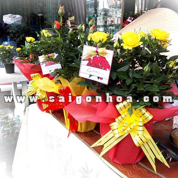 Qua Tang Y Nghia Ngay Le Hong Ty Muoi