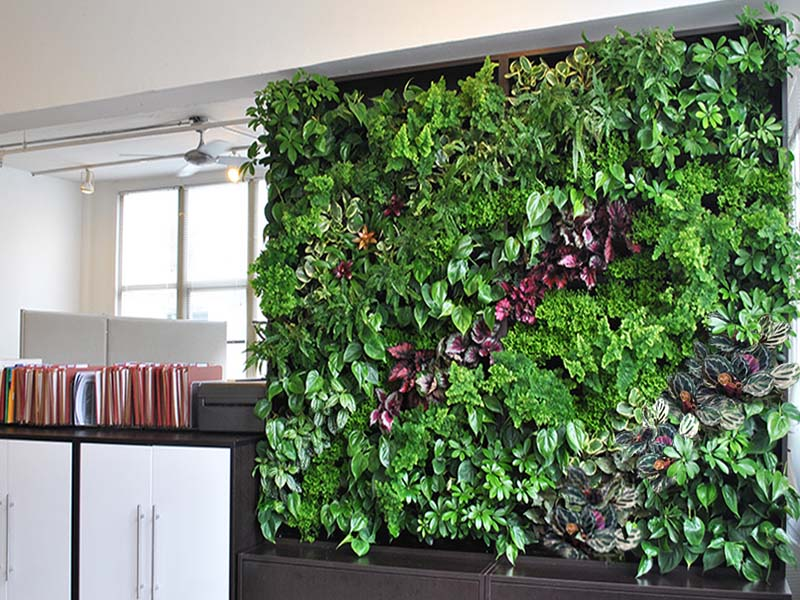 tuong cay duoi cong - Tường cây di động phủ xanh không gian sống