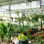 5 Gợi Ý Cải Tạo Sân Vườn Tối Giản Giúp Tiết Kiệm Chi Phí