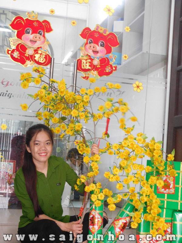 Cay Mai Gia Trang Tri