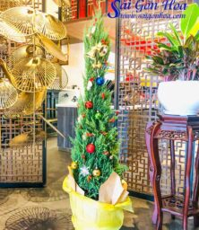Cay Thong Noel Tung But