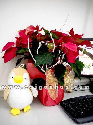 Cây Trạng Nguyên Quà Tặng Noel