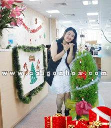 Cay Tung Thom Trang Tri Noel