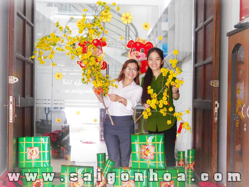 Tet Van Phong Voi Mai Dao