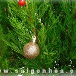 Trai Chau Noel