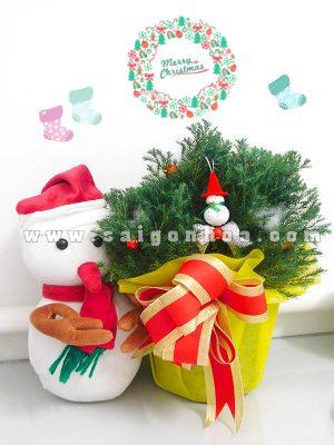 Cây Tùng Bồng Lai Quà Tặng Noel