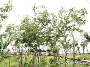 Vuon Uom Cay Mong Bo Tim