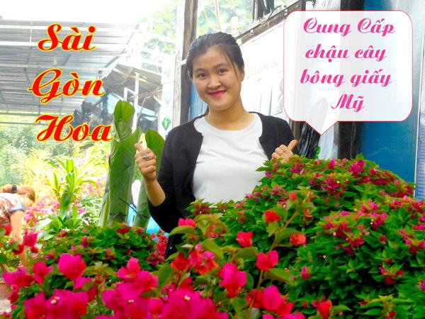 Ban Chau Cay Bong Giay