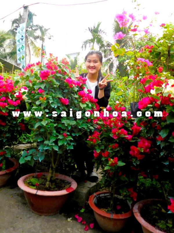 Ban Chau Cay Hoa Giay