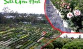 Cay Hoa Tet Ky Hoi