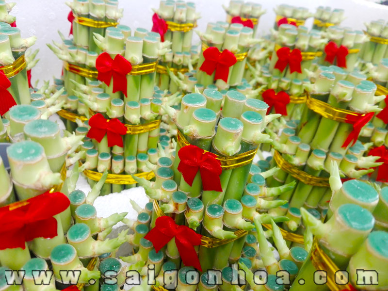 Cay Phat Loc Tang