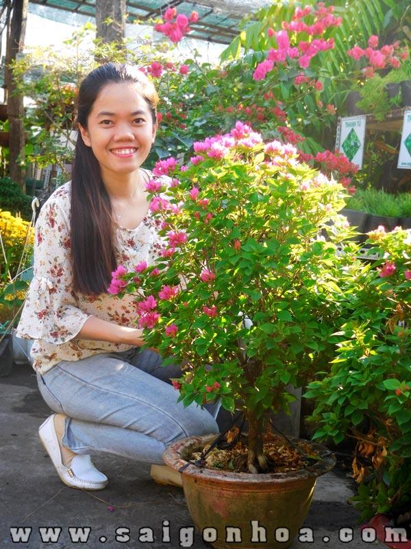 Chau Cay Bong Giay My Nho