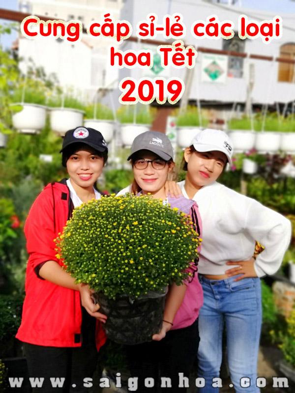 Cung Cap Si Le Hoa Canh Tet 2019