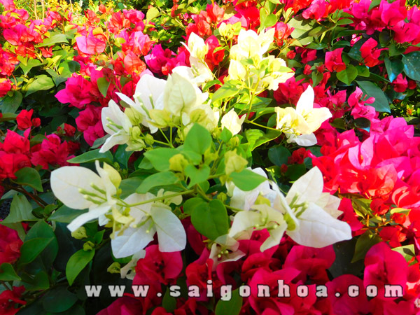 Hoa Bong Giay Ghep