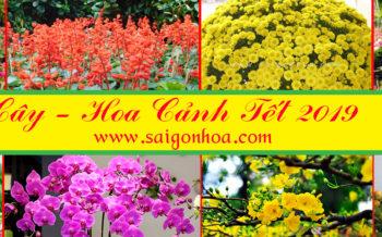 Hoa Cay Canh Tet