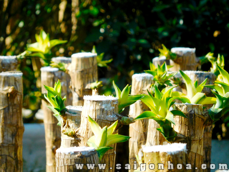 vườn phát tài