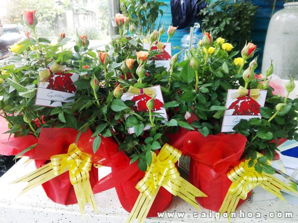 Hoa Hong Qua Tang