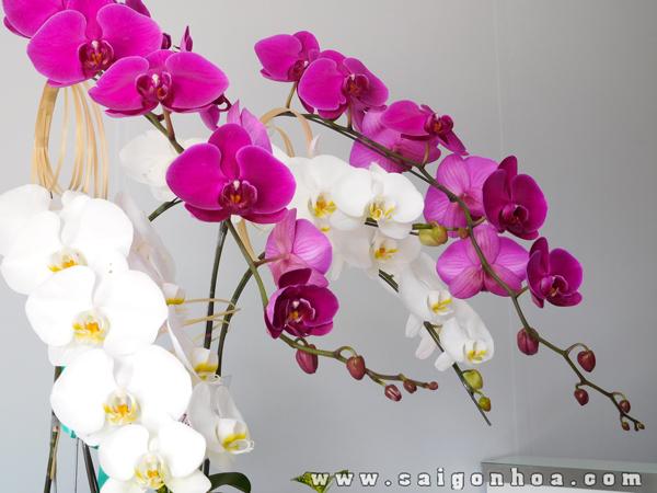 Hoa Lan Ho Diep