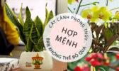Cay Canh Phong Thuy Hop Menh