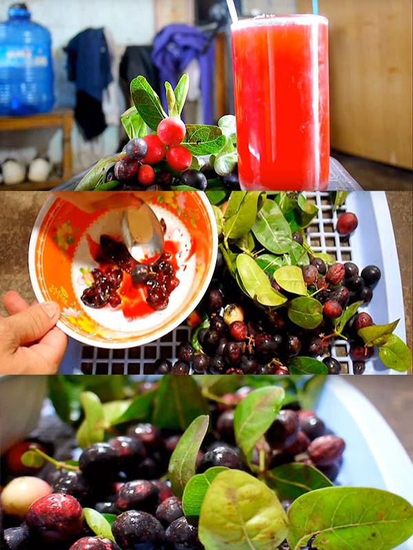 Cây Si rô - Giống cây ăn quả nên trồng sân vườn