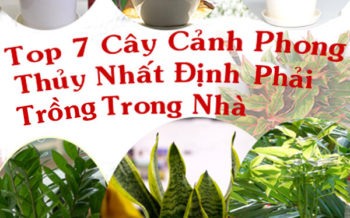 Top 7 Cay Canh Nhat Dinh Trong Trong Nha 1