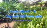 Cung Cap Cay Mat Cat